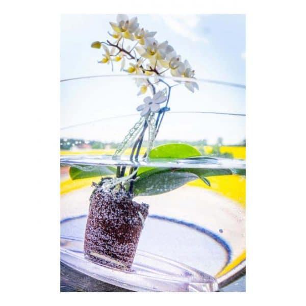 Orchideen Düngetabs | Inhalt 20 Stück